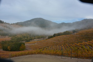 Mt. St Helena (Fall)